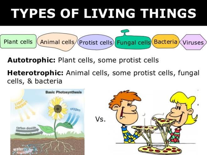 03-6-kingdoms-prokaryote-eukaryote-3-728
