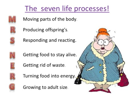 life-processes-and-cell-activity-3-728