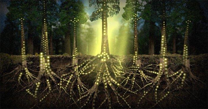 plants-communicate-using-an-internet-of-fungi
